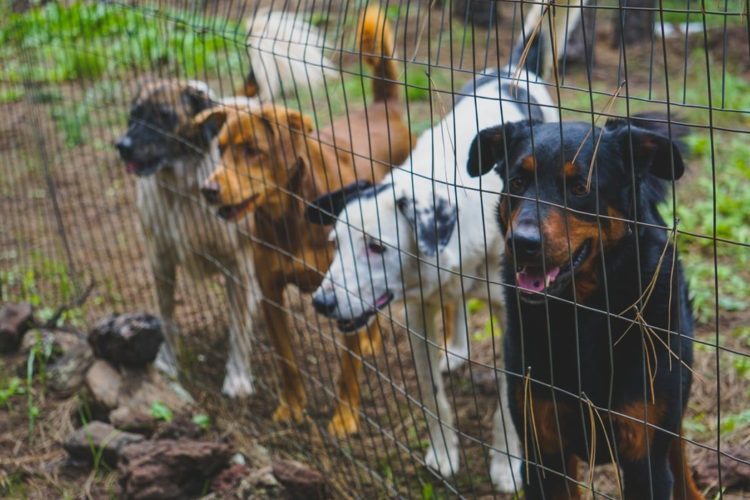 Choosing a kennel for dogs - Post Thumbnail
